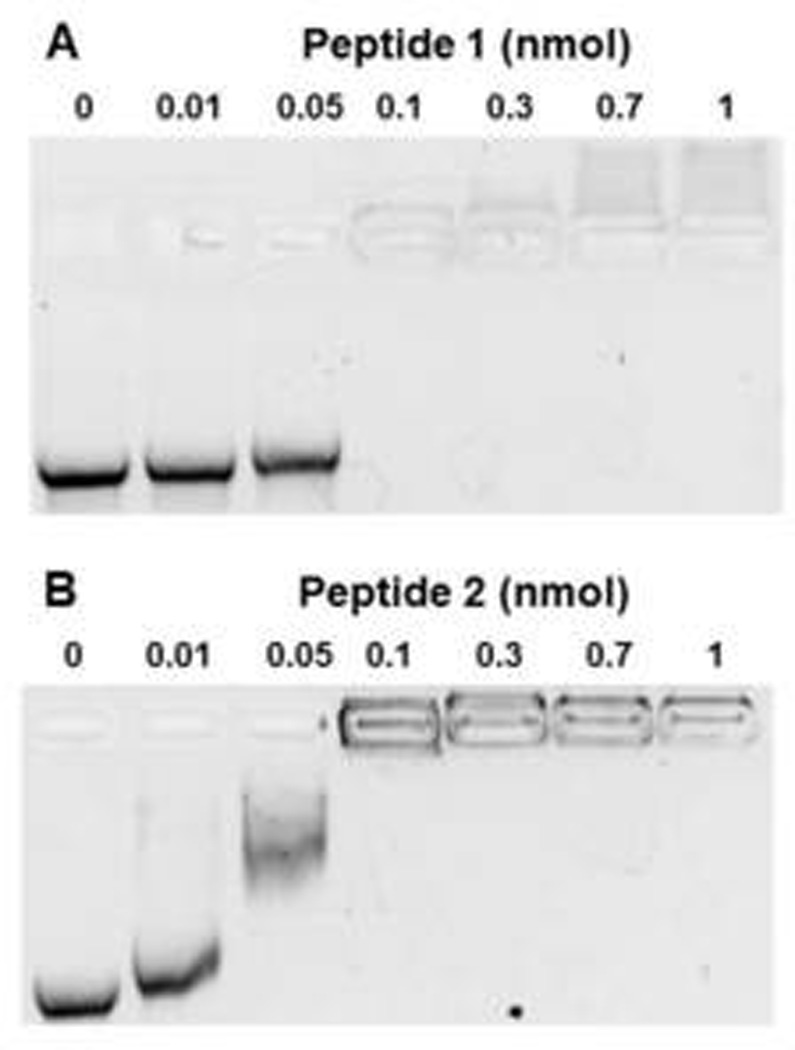 Metabolic Stability of mRNA Polyplexes UTR mRNA (2 µg) was complexed with 1.6 nmol of peptide 1 (panel A) or peptide 2 (panel B) to form mRNA polyplexes that were digested with 0, 3, 10, 30, 100, 300, 1000, or 3000 ng/ml of RNase A in 20 µL 5 mM HEPES buffer, pH 7.4 at 37°C for 10 min. mRNA polyplexes were digested with proteinase K to remove PEG-peptides. Following phenol:chloroform:isoamyl alcohol extraction, mRNA was electrophoresed on 1% agarose gel then stained with ethidium bromide. Both PEG-peptides were found to protect mRNA from RNase digestion up to 100 ng/mL, whereas naked mRNA was completely digested with 3 ng/ml.