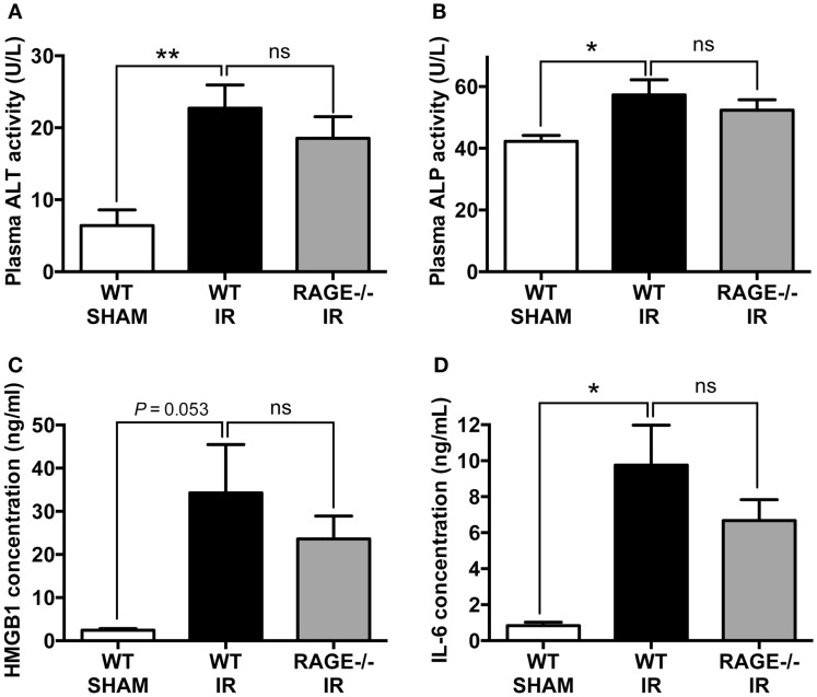 Elimination of RAGE does not influence remote organ (liver) injury and systemic inflammation following intestinal IR . Mice were subjected to 30 min mesenteric artery occlusion, followed by 150 min reperfusion. Peripheral blood samples were collected from WT-SHAM, WT-IR, and RAGE −/− IR groups for enzyme activity and pro-inflammatory markers. (A,B) Activities of liver enzymes ALT (A) and ALP (B) measured as markers of liver injury. (C,D) Levels of pro-inflammatory mediators <t>HMGB-1</t> (C) and IL-6 (D) . Data are presented as mean ± SEM, n = 5 (WT-SHAM); n = 13 (WT-IR); n = 15 (RAGE −/− IR) where * p
