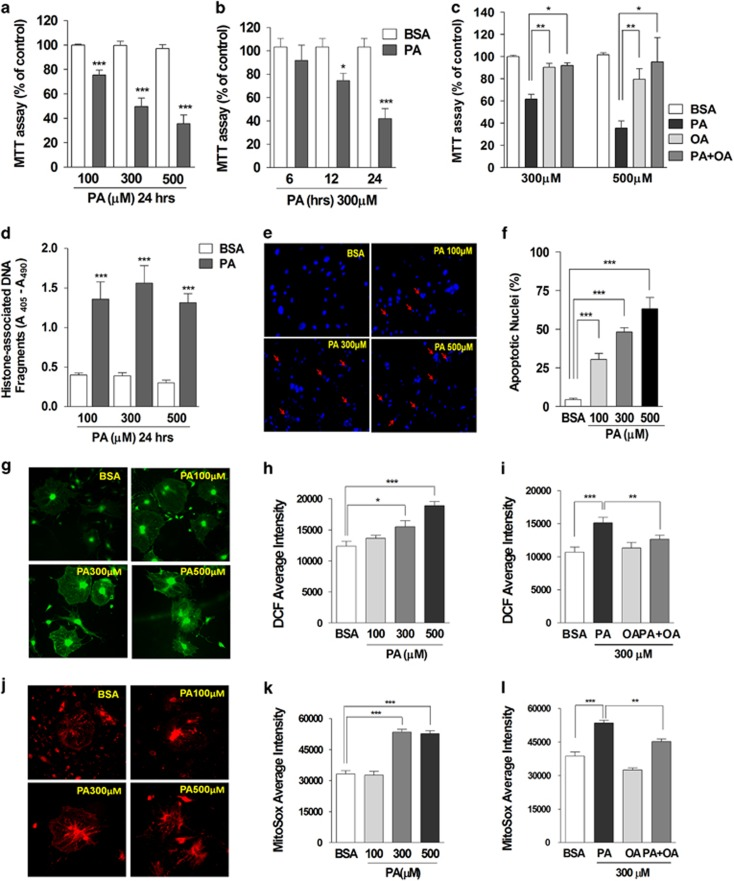 Palmitate, but not oleate, increased cytosolic and mitochondrial ROS production and induced cytotoxicity in mouse podocytes. Palmitate (PA) or bovine serum albumin (BSA) was applied to differentiated mouse podocytes with different concentrations (( a ), N =10) and durations (( b ), N =7). The effect of oleate (OA) on PA-induced cytotoxicity was also analyzed (( c ), N =3). Cytotoxicity by palmitate treatment (24 h) was evaluated by MTT assay ( a – c ) and quantitative determination of apoptotic DNA fragments (( d ), N =5). Condensed and fragmented apoptotic nuclei induced by palmitate were detected by DAPI staining ( e ) and are expressed as the percent of apoptotic nuclei (( f ), N =8). Podocytes treated with BSA or palmitate (PA) were loaded with DCF-DA ( g – i ) or mitoSox ( j – l ) and the fluorescence intensity was measured using a fluorescence microscope imaging system. Average florescence intensities of DCF (19–29 images from ≥5 independent experiments; ( b ) and ( c )) or mitoSox (7–10 images from ≥3 independent experiments; e and f ) were analyzed. Data are presented as mean±S.E.M., and *, **, *** denote P
