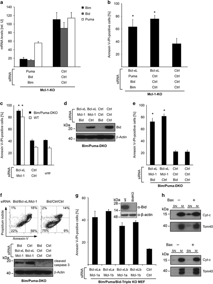 Apoptosis induced by Bcl-X L /Mcl-1 inhibition occurs in absence of activator BH3-only proteins. ( a ) Mcl-1-deficient MEFs were treated with control siRNAs or siRNAs targeting Puma, Bid, and Bim simultaneously. mRNA levels were measured 24 h after transfection. Data show means±S.D. of three independent experiments. ( b ) Mcl-1-deficient MEFs were transfected with control siRNAs or siRNAs targeting Puma, Bid and Bim. Forty-eight hour after transfection, cells were transfected with Bcl-X L or control siRNAs and cell death was measured 24 h later. Data show means±S.D. of three independent experiments. ( c ) MEFs from Bim/Puma-double-deficient or WT mice were transfected with Bcl-X L and Mcl-1 or control siRNAs. Cell death was measured 3 days after transfection. ( d ) MEFs from Bim/Puma-double-deficient mice were transfected with control or Bid-specific siRNA for 3 days. Then, cells were seeded and transfected with control, Bcl-X L -, Mcl-1- and Bid-specific siRNAs as indicated. Bid was quantified by immunoblotting 3 days after the second transfection. Results are representative of three independent experiments. ( e ) Cell death was measured in Bim/Puma-double-deficient MEFs treated as described in d . The mean percentage±S.D. of Annexin V-/propidium iodide-positive cells of three independent experiments is given. ( f ) Upper panel: representative histogram of Bim/Puma-double-deficient MEFs treated as described in d indicating cells undergoing apoptosis as demonstrated by an Annexin V-positive/propidium iodide-negative cell population. Lower panel: quantification of caspase-3 activation by immunoblotting. Results are representative of three independent experiments. ( g ) Bid/Bim/Puma-triple-deficient MEFs were transfected with Bcl-X L - and Mcl-1-specific siRNAs or control siRNAs. Cell death was assessed after 48 h. For Bcl-X L and Mcl-1 two different siRNA sequences (siRNA a or b) were used in different combinations. Inset shows result of knockout of Bid using CRISPR/