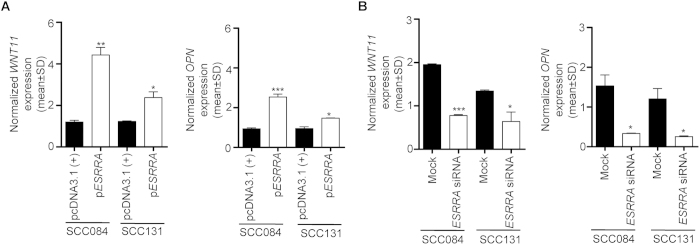 The effect of ESRRA overexpression and knock down on its transcriptional targets. ( A ) The qRT-PCR analysis to assess the level of WNT11 and OPN transcripts in cells transfected with pcDNA3.1(+) and p ESRRA . ( B ) The qRT-PCR analysis to assess the level of WNT11 and OPN transcripts in cells transfected with mock and ESRRA siRNA. *p