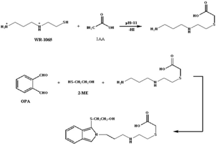 Alkylation of WR-1065 with IAA followed by derivatization with OPA-2-ME