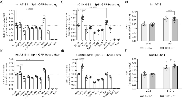Co-expression of target genes affects split-GFP-based specific and volumetric productivity of hα1AT-S11 and hC1INH-S11. ( a , b ) Plasmid encoding hα1AT N-terminally tagged with S11_M3 was co-transfected with mock plasmid or plasmids encoding target (mouse) genes into CHO-S cells in 96-HDW-microplates. Three days after transfection, supernatants were obtained and subjected to split-GFP product titer assay for determination of relative titer. Split-GFP-based specific productivity ( q p ) and titer are shown. Eight separate transfections were performed in each experiment and experiments were performed twice (n = 2; 16 wells). Mean and standard deviation are depicted. Only statistically significant (p ≤ 0.05) increases in productivity are shown. ( c , d ) As described for panels ( a,b ), with the only difference being use of plasmid encoding hC1INH C-terminally tagged with S11_M3 instead of plasmid encoding hα1AT. ( e , f ) Comparison of split-GFP-based product titer assay and ELISA. hα1AT (mock and Atf4 ) and hC1INH (Mock and Xbp1s ) supernatants described in panels a-d were subjected to ELISA for determination of hα1AT and hC1INH titers. Mean, standard deviation and percentage difference are shown.