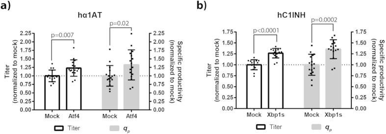 Positive effects of target genes on productivity validated on untagged hα1AT and hC1INH. ( a ) Plasmid encoding untagged hα1AT was co-transfected with a mock plasmid or plasmid encoding Atf4 into CHO-S cells in a 96-HDW-microplate. Three days after transfection, supernatants were obtained and hα1AT titer determined by ELISA. Normalized titer and specific productivity ( q p ) are shown. Eight separate transfections were performed in each experiment and experiments were performed twice (n = 2; 16 wells). Mean, standard deviation, and statistically significant (p ≤ 0.05) fold-changes are depicted. ( b ) Plasmid encoding untagged hC1INH was co-transfected with mock plasmid or plasmid encoding Xbp1s into CHO-S cells in 96-HDW-microplate. Three days after transfection, supernatants were obtained and hC1INH titer determined by ELISA. Normalized titer and specific productivity ( q p ) are shown. Eight separate transfections were performed in each experiment and experiments were performed twice (n = 2; 16 wells). Mean, standard deviation, and statistically significant (p ≤ 0.05) fold-changes are depicted.