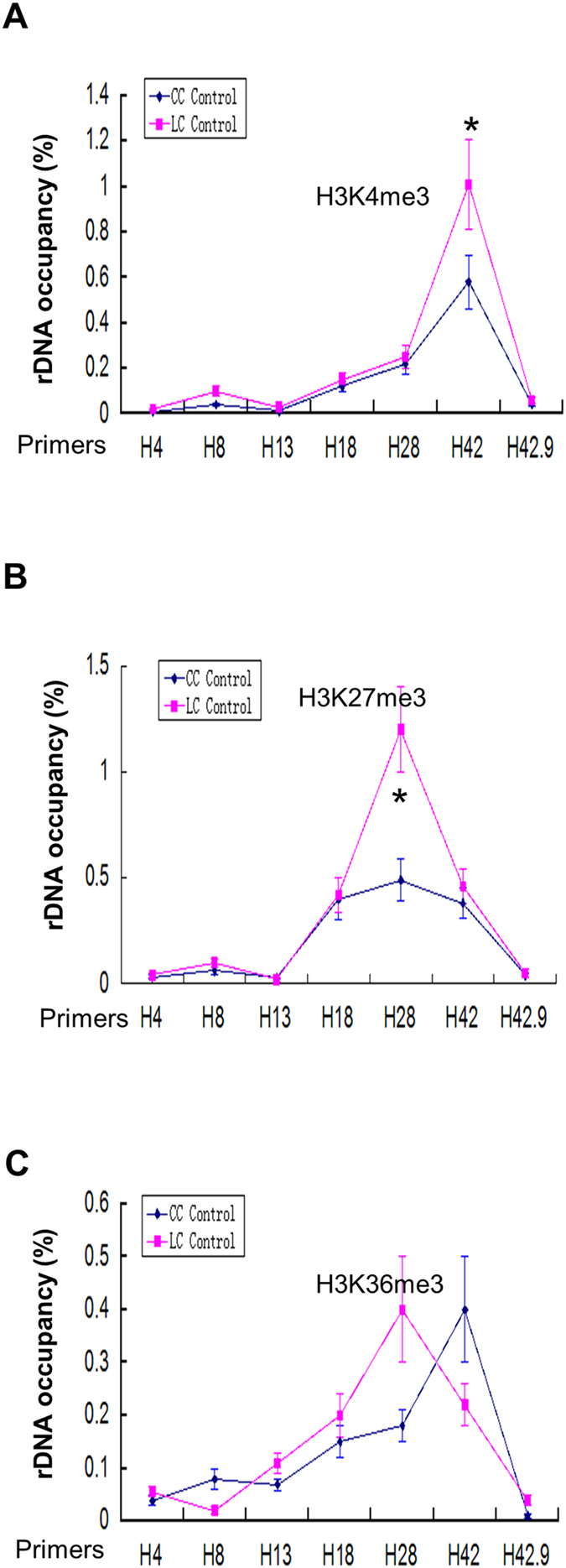 ChIP-QPCR for histone modifications (H3K4me3, H3K36me3 and H3K27ac) in human liver cancer cell (LC control) and normal liver cell (CC control). ( A ) Enrichment of H3K4me3 on rDNA analyzed by ChIP-QPCR. Chromatin from HepG2 cells was cross-linked and immunoprecipitated with H3K4me3 antibody, DNA was analyzed by QPCR with different sets of primers indicated in ( A ). The percentage of DNA associated with anti-H3K4me3 antibody was calculated relative to the DNA from ChIP input. Values are represented by means ± SD from three independent ChIP experiments, each experiment was tested by at least three independent QPCR reactions. ( B ) Enrichment of H3K27me3 on rDNA analyzed by ChIP-QPCR. Chromatin from HepG2 cells was cross-linked and immunoprecipitated with H3K27me3 antibody, DNA was analyzed by QPCR with different sets of primers indicated in ( A ). The percentage of DNA associated with anti-H3K27me3 antibody was calculated relative to the DNA from ChIP input. Values are represented by means ± SD from three independent ChIP experiments, each experiment was tested by at least three independent QPCR reactions. Student's t-test was performed between human liver cancer cell (LC Control) and normal liver cell (CC Control). ( C ) Enrichment of H3K36me3 on rDNA analyzed by ChIP-QPCR. Chromatin from HepG2 cells was cross-linked and immunoprecipitated with H3K27me3 antibody, DNA was analyzed by QPCR with different sets of primers indicated in ( A ). The percentage of DNA associated with anti-H3K36me3 antibody was calculated relative to the DNA from ChIP input. Values are represented by means ± SD derived from three independent ChIP experiments, each experiment was tested by at least three independent QPCR reactions. Student's t-test was performed between human liver cancer cell (LC Control) and normal liver cell (CC Control).