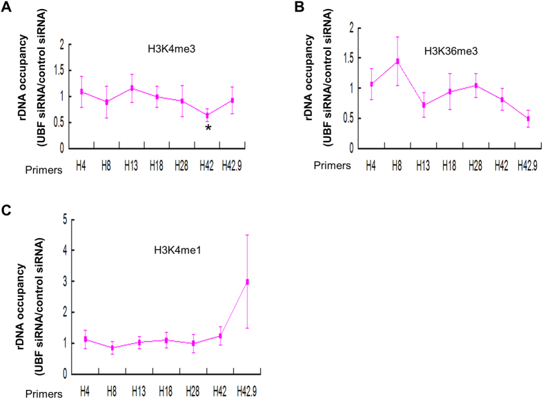 Effect of UBF depletion on the distribution of histone modification marks (H3K4me3, H3K36me3, H3K27me3 and H3K4me1) at rDNA in human liver cancer cell. ( A ) Loss of UBF leads to a decrease of H3K4me3 at H42 region of rDNA. ChIP-QPCR analysis of different regions of rDNA in HepG2 cells transfected with control or UBF siRNA using antibodies against H3K4me3. The ratio of rDNA occupancy between UBF knockdown cells and control cells was calculated for each antibody. Student's t-test was performed between cells transfected with or without UBF siRNA. ( B–C ) Depletion of UBF does not alter H3K36me3 and H3K4me1 distribution at rDNA. ChIP-QPCR analysis of different regions of rDNA in HepG2 cells transfected with control or UBF siRNA using antibodies against H3K36me3 ( B ), H3K4me1 ( C ). The ratio of rDNA occupancy between UBF knockdown cells and control cells was calculated for each antibody. Student's t-test was performed between cells transfected with or without UBF siRNA.