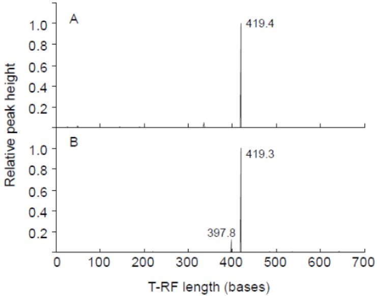 T-RFLP profiling of the cyanobacterial 16S rRNA gene amplified as template total <t>DNA</t> of the gastric content of dead egrets. KS2P (A) and KS4P (B) were used for <t>PCR</t> amplification. HaeIII was used for digestion. The x-axis indicates the terminal restriction fragment length (bases) between 0 and 700 bases, and the y-axis represents the relative height of the peak. The highest peak was calculated as 1. A relative height of over 0.1 showed the T-RF length.
