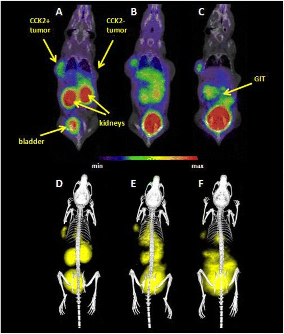 Static μPET/CT images of [ 68 Ga]-AAZTA-MG in CCK+/− tumour xenograft-bearing BALB/c nude mice 30 ( a , d ), 45 ( b , e ) and 60 ( c , f ) min p.i.; coronal slices ( a , b , c ) and 3D volume rendered images ( d , e , f ). (supine position; injected dose ~5 MBq; anaesthesia: 2 % <t>isoflurane;</t> scan duration: 10-min PET scan followed by 30-min CT scan)
