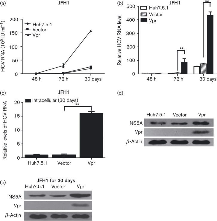Vpr activates HCV replication in stable Vpr-expressing cells. (a) Quantitative HCV RNA assay in stable vector-Huh7.5.1, Vpr-Huh7.5.1 and Huh7.5.1 cells at 48 h, 72 h and 30 days post-JFH1 infection. (b) Relative fold change of HCV RNA levels. (c) Quantitative PCR for intracellular HCV RNA levels in the stable vector-Huh7.5.1, Vpr-Huh7.5.1 and Huh7.5.1 cells at 30 days post-JFH1 infection. (d, e) Western blotting confirmed the expression of β-actin, NS5A and Vpr in stable Huh7.5.1 cell lines at 72 h (d) and 30 days post-JFH1 infection (e). The data are presented as mean ± sd. ** P