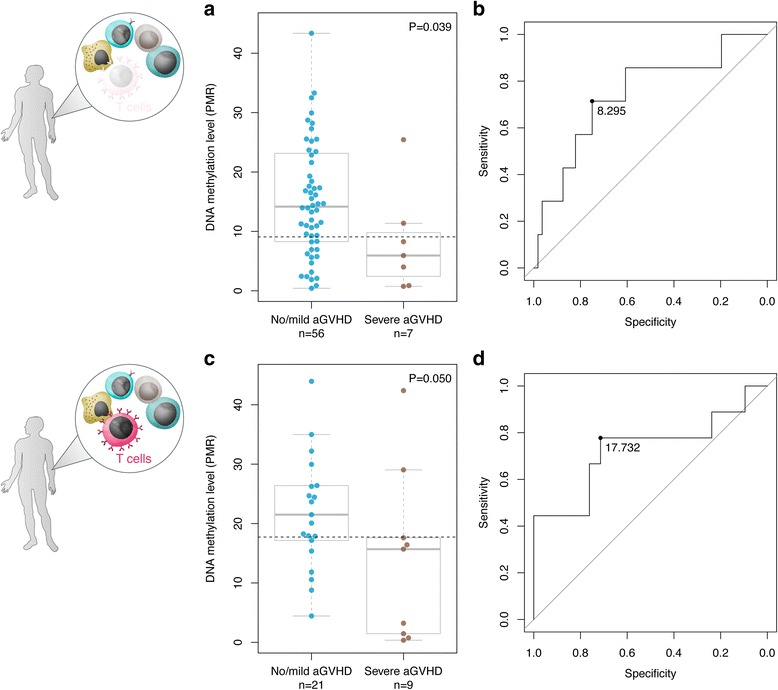 Validation of top-ranked DMP cg20475486 using a clinical biomarker assay. Replication of the top-ranked DMP associated with aGVHD severity, cg20475486, using a semi-quantitative DNA methylation assay. a Box-and-whisker plot of DNA methylation values in graft donors in T cell-depleted HSCT (initial discovery cohort). We replicated the DNA hypomethylation phenotype in HSCT donors matched to recipients with severe aGVHD compared to no/mild aGVHD ( P = 0.039, Wilcoxon rank-sum test). b At a relative DNA methylation threshold of 8.295 (dotted line), the AUC was 0.74 with a maximal specificity and sensitivity of 0.75 and 0.71, respectively. c Box-and-whisker plot of DNA methylation values in graft donors in T cell-replete HSCT (that is, without the application of in vivo alemtuzumab). In an independent sample cohort, we confirmed the observed DNA methylation phenotype, suggesting the epigenetic classifier is also effective in the context of a T cell-replete conditioning regimen ( P = 0.050). For two samples, C t -values could not be detected in the MethyLight experiments. d At a threshold of PMR = 17.73 (dotted line), the area under the ROC curve was 0.73 with a maximal specificity and sensitivity of 0.71 and 0.78, respectively