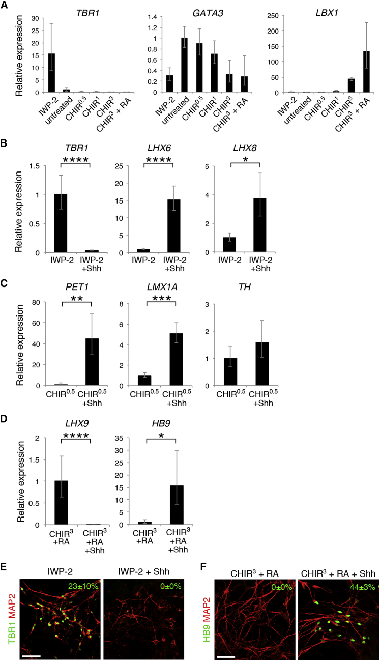 Generation of Region-Specific Neuronal Subtypes (A) qRT-PCR analysis of neurosphere-derived neurons for TBR1 , GATA3 , and LBX1 expression (n = 4−5 independent experiments, mean ± SEM). A-P patterning was maintained throughout neuronal differentiation in vitro. (B−D) qRT-PCR analysis of neurosphere-derived neurons for the expression of neuronal subtype markers expressed in the forebrain (B), the mid/hindbrain (C), and the spinal cord (D) (n = 5−7 independent experiments; mean ± SEM; ∗ p