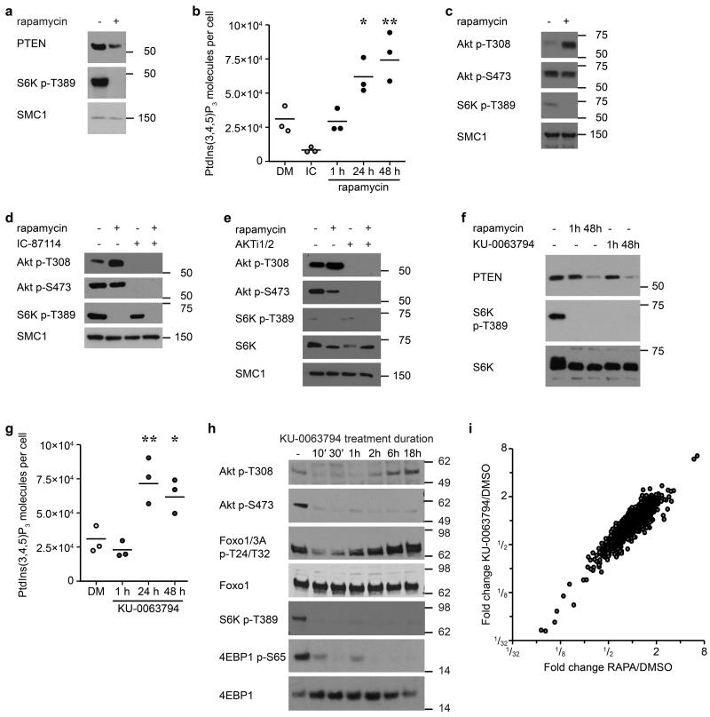 mTORC1 represses PIP 3 production and controls the mTORC2 requirement for activation of AKT (a) Immunoblot analysis of PTEN expression in CTLs cultured ± 48 h rapamycin. (b) HPLC-MS based analysis of PtdIns(3,4,5)P 3 levels in control IL-2/IL-12 maintained CTLs (DM) and CTLs treated with PI(3)K p110δ inhibitor IC-87114 (IC, 1 h) and rapamycin for the indicated times. (c) Immunoblot analysis of Akt T308 and S473 phosphorylation levels in CTLs ± 48 h rapamycin. (d, e) The data show immunoblots of Akt T308 phosphorylation in control and mTORC1 inhibited CTLs treated with (d) IC-87114 or (e) AKTi1/2. (f) Immunoblot analysis of PTEN expression in CTLs cultured ± 48 h rapamycin or <t>KU-0063794.</t> (g) HPLC-MS based analysis of PtdIns(3,4,5)P 3 levels in control CTLs and CTLs treated with KU-0063794 for indicated durations. (h) Immunoblot analysis of Akt T308, Akt S473, FOXO1/3A T24/T32 phosphorylation and phosphorylation of the mTORC1 substrates S6K T389 and 4EBP1 S65 in CTLs treated with KU-0063794 for the indicated times. (i) Scatter plot depicting correlation of mean (n=3) fold changes in transcript expression from Affymetrix microarray analysis of control CTLs vs CTLs treated with rapamycin (x-axis) or KU-0063794 (y-axis). Immunoblots are representative of at least three biological replicates. (b, g) Individual data points and means are shown. P -values are determined by one-way ANOVA (Holm-Sidak) vs. DMSO (DM) as control. * P