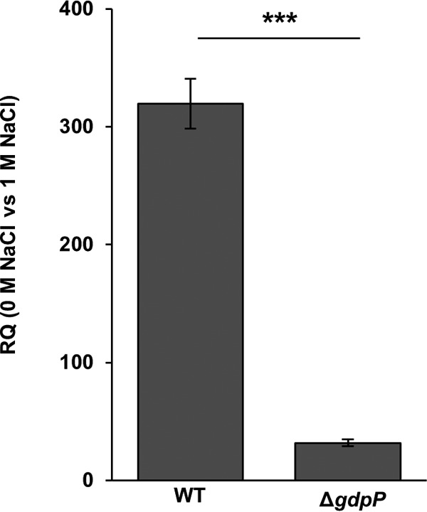 High levels of c-di-AMP inhibit expression of kdpA . Shown is the relative quantification (RQ) of transcript levels of kdpA measured by RT-qPCR for the wild-type S. aureus strain LAC* (WT) and an isogenic gdpP (Δ gdpP ) mutant strain (with constitutively high levels of c-di-AMP), normalized to gyrB transcript levels. WT and mutant S. aureus strains were grown to an OD 600 of 0.7 in LB medium without salt (0 M NaCl) or containing 1 M NaCl, and RNA was extracted and used for RT-qPCR experiments as described in Materials and Methods. Three independent experiments with triplicates were performed, and a representative result is shown. The data from one representative experiment are plotted and were analyzed by using a two-tailed Student t test. A statistically significant difference between the values was observed, with a P value of