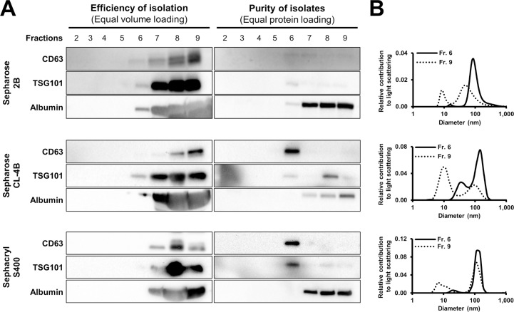 Efficiency and selectivity of size exclusion chromatography (SEC) on exosome isolation performed with various matrices. (A) CD63, TSG101 and albumin content of different fractions collected during SEC on Sepharose 2B (top), Sepharose CL-4B (middle) and Sephacryl S-400 (bottom) columns with equal volumes (left column) or equal protein amounts of fractions (right column) loaded for Western blot. (B) Size distribution of particles isolated with various SEC matrices evaluated with dynamic light scattering. Sepharose 2B (top), Sepharose CL-4B (middle) and Sephacryl S-400 (bottom) columns.