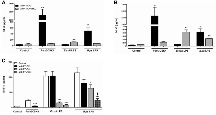LPS of B . pseudomallei signals via both TLR2 and TLR4 in in vitro human models. Human Embryonic Kidney (HEK)-293 cells, stably transfected with either CD14-TLR2 or CD14-TLR4/MD2 were stimulated with purified LPS of B . pseudomallei 1026b (100 ng/ml), LPS of E . coli 0111:B4 (100 ng/ml), PAM3CSK4 (100 ng/ml) or DMEM+ 10% FCS for 6h (A) or 24h (B) before measurement of interleukin (IL)-8 in the supernatant (n = 3). Human whole blood was pre-treated for 30 minutes with respectively RPMI 1640 medium, anti-TLR2 antibody (2500 ng/ml), anti-TLR4 antibody (1000 ng/ml) or both antibodies and hereafter stimulated with purified LPS of B . pseudomallei 1026b (100 ng/ml), LPS of E . coli 0111:B4 (100 ng/ml), PAM3CSK4 (100 ng/ml) or RPMI 1640 for 6h after which TNF was measured (C) (n = 3). An additive effect of TLR2 on TLR4 mediated signalling induced by B . pseudomallei -LPS was observed. Data are presented as means ± SEM. Results of two or three independent experiments were pooled. Mann-Whitney- U tests were performed. * P