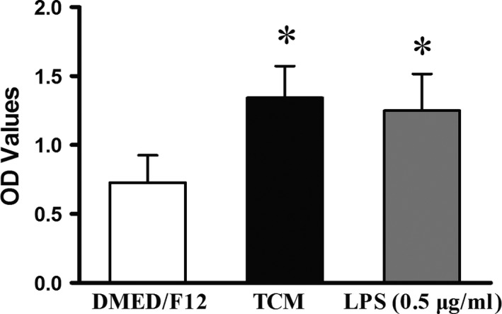 Cell viability of pMAC s after 48 hrs of co‐culture. As demonstrated by increased OD values, TCM and LPS significantly activated pMAC s compared to DMEM /F12. Nevertheless, no significant difference was observed between TCM and LPS ( P > 0.05), although a slightly higher value was obtained for TCM . * P