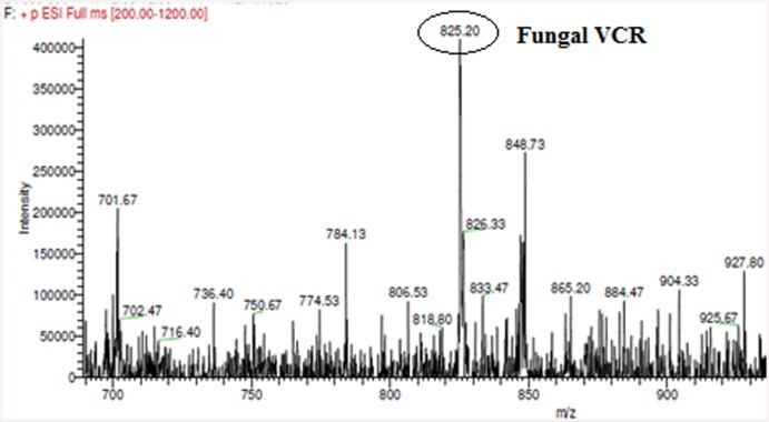 LC-ESI-MS analysis. of fungal VCR. The mass spectrum of the fungal extract showed a (M+H + ) peak at a molecular mass of 825.46, which was identical to that observed in the mass spectrum of the VCR standard.