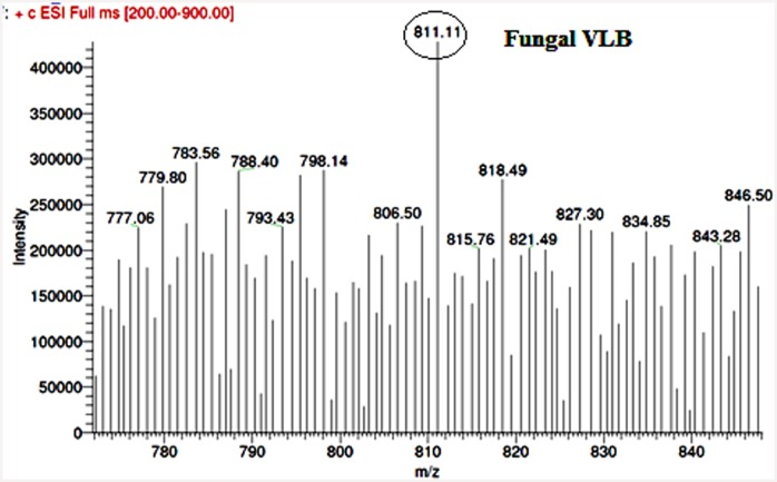 LC-ESI-MS analysis of fungal VBL. The mass spectrum of the fungal extract showed a (M+H + ) peak at a molecular mass of 811.51, which was identical to that observed in the mass spectrum of the VBL standard.