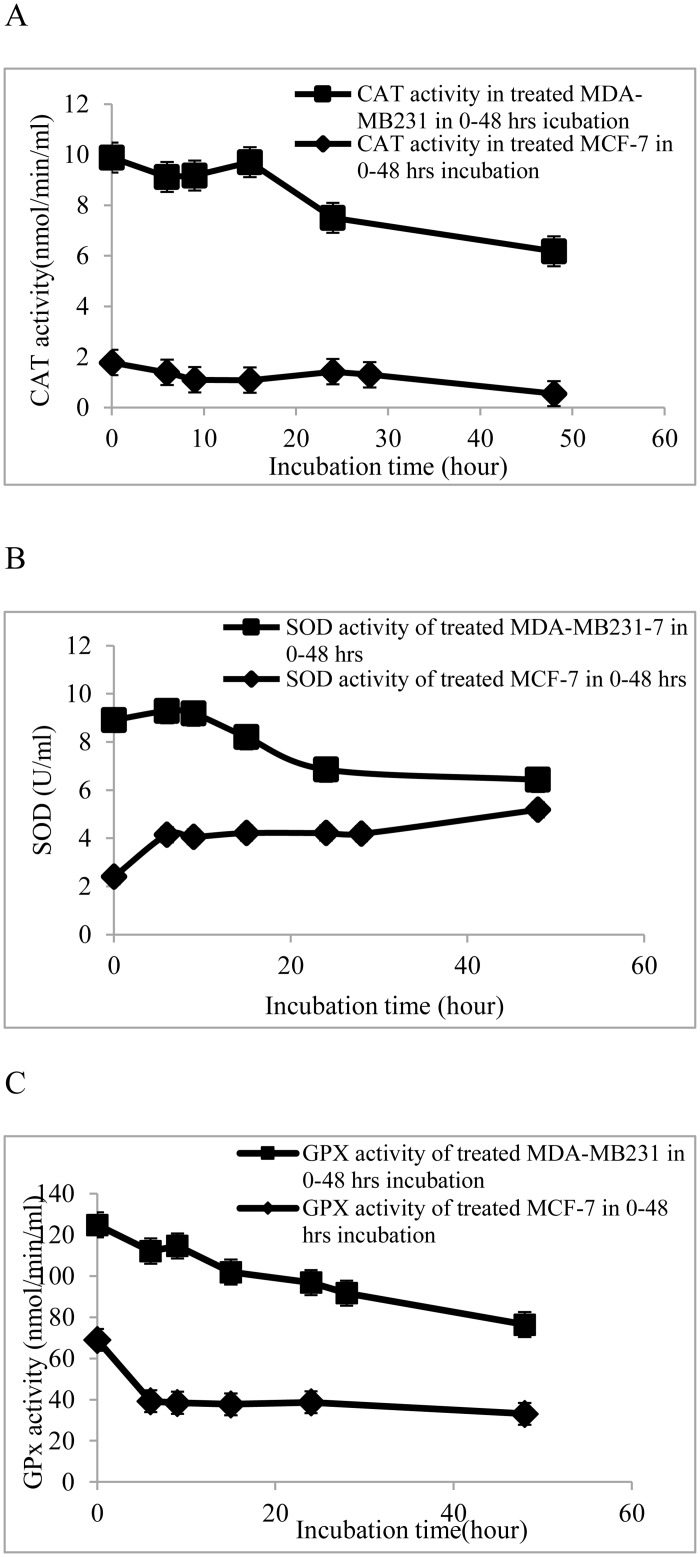 Activities of antioxidant enzymes in MDA-MB-23 and MCF-7 cells treated with 100 μg/ml of CE. Breast cancer cell lines, MCF-7 and MDA-MB-231, were seeded into 12-well plates containing RPMI 1640 and DMEM, respectively, and supplemented with 10% FBS at 5 × 10 6  cells/well and allowed to attach for 24 h. The cells were treated with 100 μg/ml of CE (IC 70  concentration determined from MTT assay) at varying time points (6, 9, 12, 24, and 48 h incubation). Activity of (A) catalase, (B) superoxide dismutase and (C) glutathione peroxidase was determined using commercial assay kits. Results are expressed as mean ± standard deviation. P