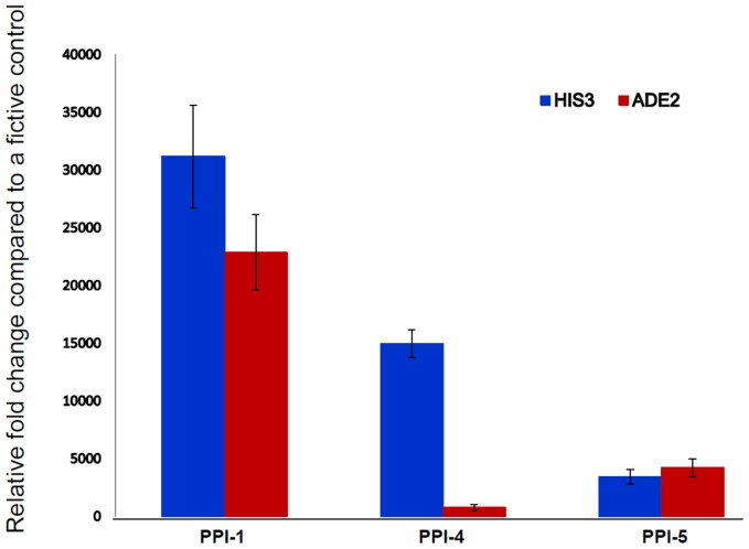 Confirmation of PPI strength using qRT-PCR . The qRT-PCR analysis quantified the expression of two reporter genes HIS3 and ADE2 for determining the strength of PPI for the selected yeast colonies (PPI-1, PPI-4, and PPI-5). These genes are under the control of Gal4-responsive promoters. The interaction between the bait and prey proteins allow the Gal4-responsive HIS3 and ADE2 genes to biosynthesis histidine and adenine for cell growth.