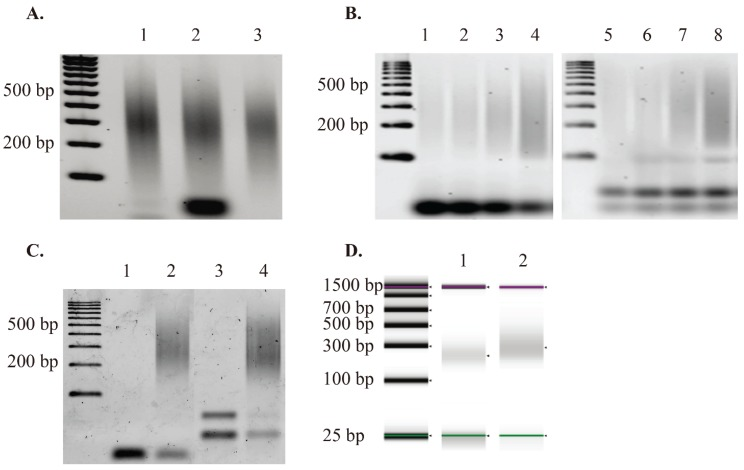 GW-COBRA and LA-COBRA library construction results. ( A ) Sonicated genomic DNA isolated from HCT116 cell line (lane 1), 50 ng of Adapter-2 ligated library material (lane 2). Column purified Adapter-2 ligated library material (lane 3); ( B ) PCR amplification test of bisulfite treated library materials. Lane 1, 2, 3 and 4 are produced by 6, 7, 8 and 9 cycles of PCR using GW-A2-FwdP and COBRA-A2-RevP primers from Table 1 with GW-COBRA library material as the template respectively. Lane 5, 6, 7 and 8 are produced by 6, 7, 8 and 9 cycles of PCR using LA-A2+T7-FwdP and COBRA-A2-RevP primers from Table 1 with LA-COBRA library material as the template, respectively; ( C ) Final library products: GW-COBRA and LA-COBRA methylome libraries of HCT116 DNA amplified using flowcell or LADS primer pairs respectively (Lane 2 and 4). Lane 1 and 3 are negative controls for GW-COBRA and LA-COBRA libraries, respectively; ( D ) <t>Bioanalyzer</t> results of GW-COBRA and LA-COBRA methylome sequencing libraries, respectively, prepared from HCT116 cell line DNA. The final library fragments ranged between 150–500 bp with an average size of 257 and 360 bp for GW-COBRA and LA-COBRA, respectively.