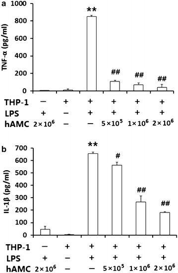 hAMCs co-culture inhibits LPS-induced TNF-α and IL-1β production in THP-1 cells. THP-1 cells were pre-treated with PMA to induce macrophage. Then, they were stimulated with 10 μg/mL LPS with or without different numbers of hAMCs (5 × 10 5 , 1 × 10 6 , 2 × 10 6 ) in a 12-well transwell plate for 24 h at 37 °C. Expression levels of TNF-α ( a ) and IL-1β ( b ) in the culture supernatants were detected by ELISA. Data represent the mean ± S.D. of three independent experiments. **P