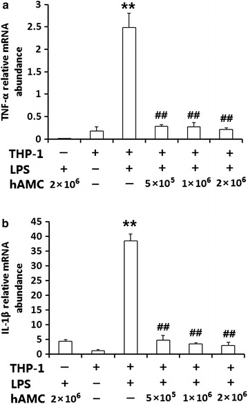 hAMCs co-culture inhibits the mRNA expression of TNF-α and IL-1β in LPS-stimulated THP-1 cells. THP-1 cells were pre-treated with PMA to induce macrophage. Then, they were stimulated with 10 μg/mL LPS with or without different numbers of hAMCs (5 × 10 5 , 1 × 10 6 , 2 × 10 6 ) in a 12-well transwell plate for 24 h at 37 °C. TNF-α mRNA ( a ) and IL-1β mRNA ( b ) expressions were determined by real time-PCR. GAPDH was used as a quantitative control. All experiments were performed three times. **P