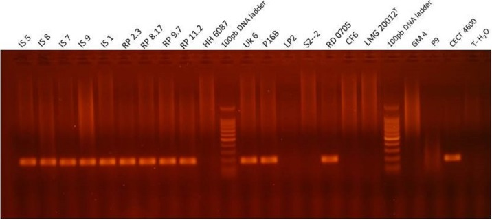 Visualization of the PCR product in agarose gel obtained with qPCR virB4 assay for representative strains of Vibrio , i.e., which were tested positive and negative for BRD development after an infection experiment. Lanes MT corresponds to the BenchTop DNA ladder (Promega, Madison, WI, USA). T-H 2 O represents the water negative control.