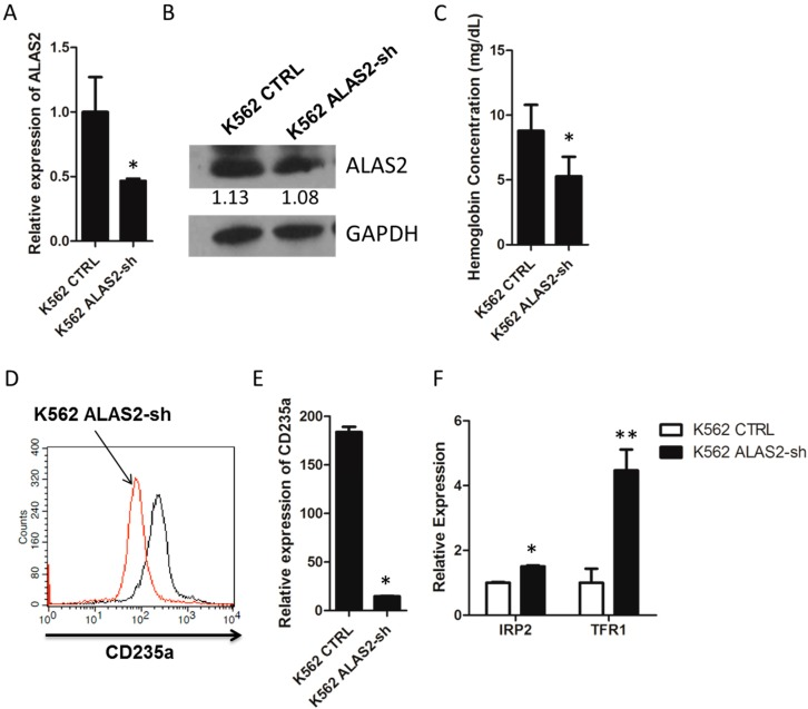 ( A ) Relative mRNA expression of ALAS2 in K562 control and K562 ALAS2-sh cells using quantitative real-time PCR; ( B ) Representative Western blots showing ALAS2 expression in K562 control and K562 ALAS2-sh cells. Quantification normalized to GAPDH by densitometry using ImageJ was provided; ( C ) Hemoglobin concentration of K562 control and K562 ALAS2-sh cells. Cell surface expression of CD235a ( D ) and mRNA levels ( E ) of K562 control (black line in D ) and K562 ALAS2-sh using FACS and quantitative real-time PCR, respectively; ( F ) Relative mRNA expression of IRP2 and TFR1 in K562 control and K562 ALAS2-sh cells using quantitative real-time PCR. All relative mRNA expression using quantitative real-time PCR was normalized to glyceraldehyde-3-phosphate dehydrogenase ( GAPDH ) expression. Asterisks indicate that differences between samples were statistically significant according to an independent-sample t -test, * p