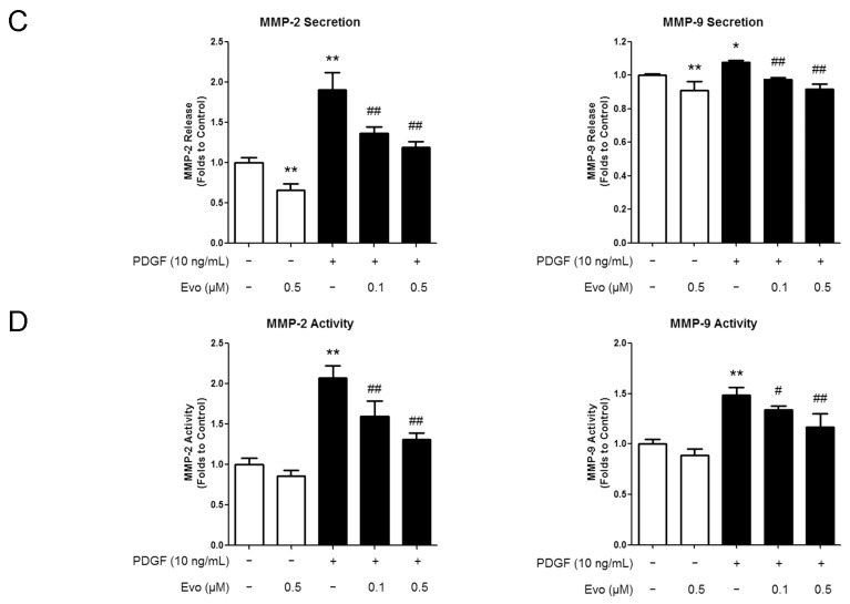 Evodiamine inhibits the expression of migration-associated regulators. ( A ) VSMCs were pretreated with evodiamine for 6 h and then stimulated with PDGF-BB for another 24 h. Western blot was used to measure the protein expression levels of regulators involved in the VSMC migration, including matrix metalloproteinase (MMP)-2, MMP-9, intercellular adhesion molecule-1 (ICAM-1), vascular cell adhesion molecule-1 (VCAM-1), and osteopontin (OPN). For both MMP-2 and MMP-9, their latent forms (72 and 92 kDa, respectively) were detected; ( B ) The signal ratio of examined protein to the internal control glyceraldehyde-3-phosphate dehydrogenase (GAPDH) was quantified by densitometric scanning; ( C ) The concentrations of MMP-2 and -9 in the culture medium were detected by Enzyme Linked Immunosorbent Assay (ELISA); ( D ) The activities of MMP-2 and MMP-9 were determined by using their respective <t>Biotrak</t> Activity Assay Systems. Evo, evodiamine. Data are presented as mean values ± SD of three independent experiments. * p