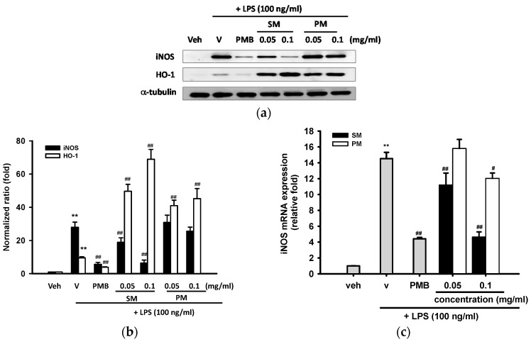 Effects of methanol fractions of seed shell (SM) and seed pomace (PM) on LPS-mediated iNOS and HO-1 expression. ( a ) RAW 264.7 macrophages were cultured with indicated reagent in 6-well plates for 16 h. Total cell lysates were prepared and the iNOS and HO-1 protein expression were detected by Western blotting, as described in Materials and Methods. The levels of α-tubulin in the total lysates serve as the loading control; ( b ) Band intensities were quantified by ImageJ software and indicated as relative folds of iNOS/α-tubulin and HO-1/α-tubulin. This experiment was replicated three times with similar results; ( c ) RAW 264.7 cells were cultured as described above for 12 h. Total <t>RNA</t> was prepared and the mRNA levels of iNOS were quantified by <t>RT-Q-PCR</t> relative to β-actin, as described in Materials and Methods. Data are represented as the mean ± SD ( n = 3). ** p