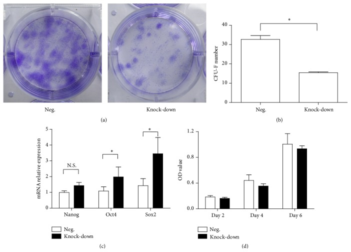 Self-renewal of transfected BM-MSCs. (a) Representative CFU-F of transfected BM-MSCs in a 6-well plate. (b) Mean value (±SD) of CFU-F number in different groups. (c) Mean relative values (±SD) of NANOG , OCT4 , and SOX2 mRNA expression in different groups. (d) Mean value (±SD) of OD values in different groups detected by MTT assay.