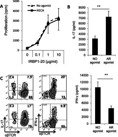 Differentiation of bone marrow cells into BMDCs in the presence of the non‐specific AR agonist NECA results in increased Th17‐stimulating ability. A: Stimulatory effect of mouse BMDCs under non‐polarizing conditions. Bone marrow cells were cultured for 5 days in medium continuing GM‐CSF (10 ng/mL) in the absence or presence of NECA (100 nM), then were detached, washed, and seeded (5 × 10 4 /well) into 24‐well plates Responder CD3 T cells, isolated from immunized B6 mice (10 6 cells/well) were added to the plates (T cell/DC ratio 20:1), then the cells were incubated in the presence of graded doses of the immunizing peptide for 48 h and T cell proliferation was assessed by 3 H‐thymidine incorporation. The results shown are the mean ± SD for one study doing in triplicated wells and the experiment was repeated 3 times with similar results. B: Stimulatory effect of mouse BMDCs on Th1 and Th17 autoreactive T cells under polarizing conditions. Responder T cells were co‐cultured for 48 h with each of the two DC preparations (generated in the absence or presence of NECA) and the immunizing peptide under polarizing conditions favoring Th1 cell proliferation (culture medium containing IL‐12) or Th17 cell proliferation (culture medium containing IL‐23), then the culture supernatants were assayed for IL‐17 (top panel) or IFN‐γ (bottom panel). C: Intracellular staining of the proliferating T cells for IL‐17 or IFN‐γ expression. The activated T cells generated in (B) using DCs generated in the absence (top panels) or presence of NECA (bottom panels) were separated on day 2 and cultured for 3 days, then the separated, activated T cells were treated for 4 h with 50 ng/mL of phorbol myristic acetate, 1 μg/mL of ionomycin, and 1 μg/mL of brefeldin A, fixed, permeabilized overnight with Cytofix/Cytoperm buffer, and stained intracellularly with antibodies against IL‐17 (left panels) or IFN‐γ (right panels) and analyzed on a FACScalibur.