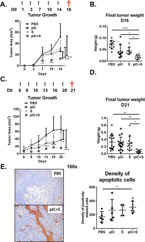 Combination of poly-ICLC and Sorafenib enhanced tumor control in mice C57BL/6 mice were transplanted with Hepa 1-6 cells and PBS or poly-ICLC (pIC) were given on the indicated days (arrows) and Sorafenib (S) was included in the diet. A B. Treatment started on day 1. n = 8–9 each group. A. Slowed tumor growth on d14, pIC+S: 12.8 ± 6.8 mm 2 vs. PBS: 52.0 ± 23.5 mm 2 , p