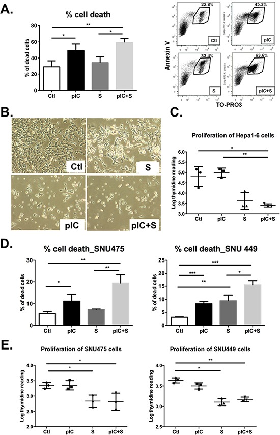 Co-treatment with poly-ICLC and Sorafenib impairs tumor cell survival and proliferation Hepa 1-6 cells were either treated with vehicle (Ctl), poly-ICLC (pIC), Sorafenib (S) or a combination of both (pIC+S) at 37°C. A. Enhanced cell death was observed as an increased percentage of Annexin-V + Topro-3 + cells after 48 h treatment with pIC+S: 59.5 ± 4.6% vs. Ctl: 29.1 ± 7.3%, p = 0.004, and vs. S: 34.4 ± 7.1%, p = 0.01. Right, representative dot plots showing increased Annexin-V + Topro-3 + population among Hepa 1-6 cells treated with pIC+S. B. Representative light microscopy images of Hepa 1-6 cells in culture showing enhanced cell death after pIC+S treatment for 48 h (100× magnification). C. Inhibition of Hepa 1-6 cell proliferation as measured by thymidine incorporation (Log) at 24 h after treatment with pIC+S: 3.4 ± 0.1 vs. Ctl: 4.8 ± 0.5, p = 0.03 and vs. pIC: 4.9 ± 0.2, p = 0.005. D. Enhanced cell death and E. inhibition of cell proliferation were observed in SNU449 and SNU475 cells after treatment with pIC+S. For all graphs, mean and SD were shown. * p