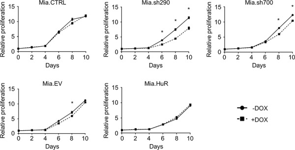 HuR is required for short-term proliferation of PDA cells Relative proliferation of DOX-inducible MIA PaCa-2 cell lines treated with 0 or 2 μg/ml DOX for the indicated time points, as determined by measurement of dsDNA content by PicoGreen staining. Each data point represents the mean of 5 independent experiments ± standard error of the mean (SEM). * = p