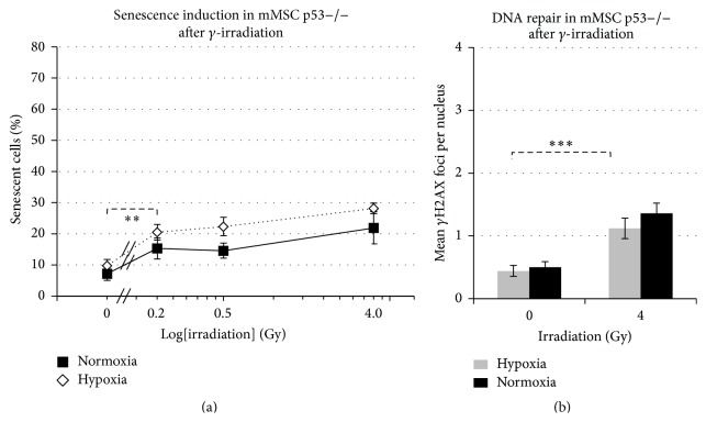Impact of p53 status on senescence induction and number of DNA repair foci. (a) Graph shows percentage of p53−/− mMSCs undergoing senescence in hypoxic and normoxic conditions after exposure to γ -irradiation (sham-irradiated = 0 Gy, 3 biological replicates), radiation dose on logarithmic scale. (b) Quantification of p- γ H2AX foci in 50 p53−/− mMSC nuclei depicted as mean values ± standard error of the mean (3 biological replicates).