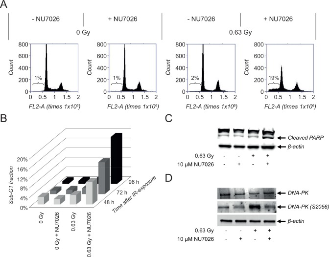 Combination treatment with NU7026 and IR induces apoptosis in NGP cells. (A) Effects of NU7026 plus IR combination therapy versus monotherapy on the cell cycle status of NGP cells. For combination treatment, cells were pre-treated with 10 μM NU7026 for 1 h before exposure to 0.63 Gy IR. Samples were analyzed by FACS analysis at 96 h after treatment. (B) FACS analysis of the effects of combination therapy versus monotherapy on the sub-G1 fraction of cells at 48, 72 and 96 h after treatment. (C) Western Blot detection of total DNA-PKcs and activated DNA-PKcs (via phosphorylation at serine 2056) levels and PARP cleavage after combination therapy versus monotherapy with 10 μM NU7026 and/or 0.63 Gy IR, at 1 h and 96 h after IR-exposure, respectively. β-actin protein levels were used as loading control.