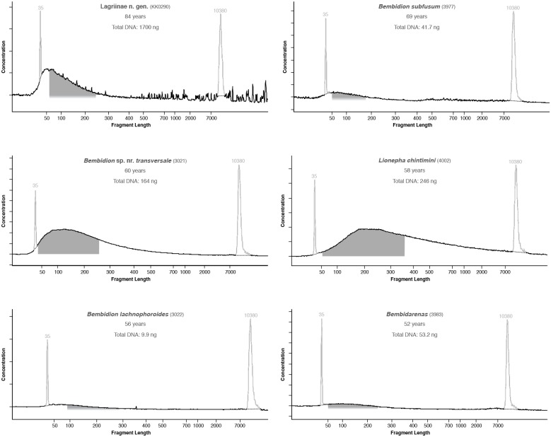Electropherograms of DNA extracted from older museum specimens that were subsequently used in library preparation. Pale spikes at 35 and 10380 bases represent standards included in each analysis. Dark shaded regions, when present, correspond to range of fragments that were selected and sequenced on the HiSeq 2000.