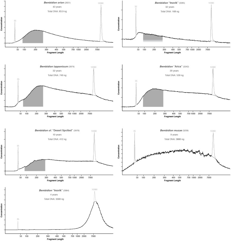 """Electropherograms of DNA extracted from younger museum specimens that were subsequently used in library preparation. Pale spikes at 35 and 10380 bases represent standards included in each analysis. Dark shaded regions, when present, correspond to range of fragments that were selected and sequenced on the Illumina HiSeq 2000. Regions are not shown for Bembidion musae or Bembidion """"Inuvik"""" 3984 as the DNA in those samples was sonicated prior to library preparation. For each specimen, age and total DNA in the extraction is also shown."""