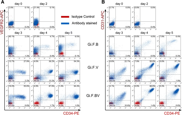 Flow cytometry analysis of induction of H1-hESCs towards endothelial lineage. Representative flow cytometry overlays display the kinetics of co-expression of vascular endothelial growth factor receptor-2 ( VEGFR2 ) and CD34 ( a ), and CD31 and CD34 ( b ) upon induction of H1-hESCs with BMP4 ( Gi.F.B ), VEGF ( Gi.F.V ) and BMP4 + VEGF ( Gi.F.BV ) over a differentiation period of 5 days