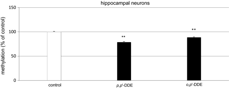 Influence of p,p ′-DDE and o,p ′-DDE on global DNA methylation at 7 DIV hippocampal cultures. Primary hippocampal cultures were treated with p,p ′-DDE or o,p ′-DDE (both at 10 μM) and total DNA was extracted from hippocampal cells at 24 h post-treatment, followed by ELISA. Each bar represents the mean of three independent experiments ± SEM. The number of replicates in each experiment ranged from 2 to 3. ** p