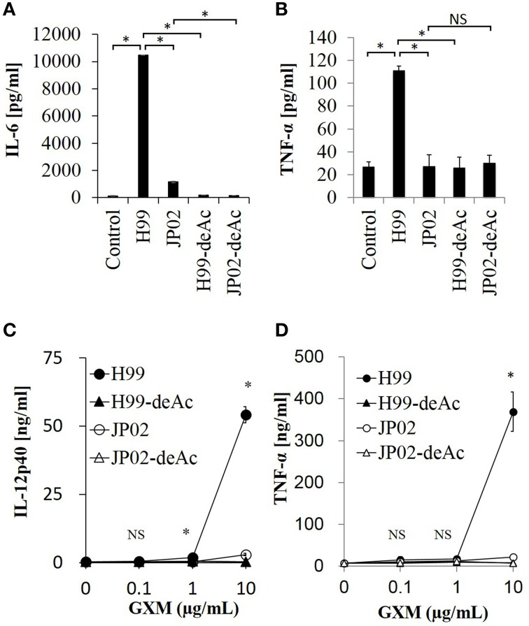 Cytokine release from dendritic cells in response to native GXM purified from H99 and JP02 strains and the corresponding O-deacetylated products . IL-6 (A) and TNF-α (B) release from JAWSII cells (2 × 10 5 cells/mL) stimulated by GXMs (50 μg/mL). IL-12p40 (C) and TNF-α (D) release from BMDCs (1 × 10 6 cells/mL) stimulated by GXMs. The experiments were performed in triplicate (means ± SD). Data sets in (A) or (B) were compared by the unpaired t -test, except for vs. control in (A) , which were compared by the Mann–Whitney U-test. Treatment group means of (C) or (D) were compared to H99 GXM by the unpaired t -test, except for vs. JP02 at 10 μg/mL in (C) , which were compared by Welch's t -test. * P