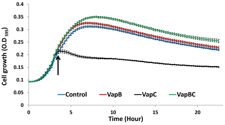 Growth curve of Escherichia coli BL21-AI transformed with pACYCDuet-1 plasmids expressing recombinant VapB or VapC separately, or VapB and VapC together. E. coli cells carrying the empty vector were grown as control. Cells were grown in LB media at 37°C, with linear shaking (1 mm) for 15 s every 15 min. Arrow indicates expression induction by 1 mM IPTG and 0.5% (w/v) arabinose. Growth curves were initiated by adding three colonies to each well, n = 12 (each replicate consisting of three pooled colonies); error bars are standard error of mean. Results from one representative experiment, out of three with similar results are shown.