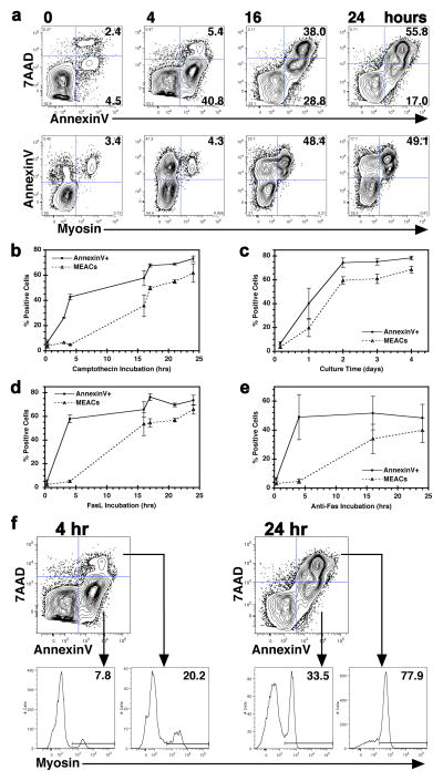 MEACs accumulate over time during both early and late apoptosis. ( a ) Flow cytometric analyses of Jurkat cells are displayed as contour plots of fluorescence intensity shown on five-log scales with BiExponential transformation. Cells were treated with camptothecin for 0, 4, 16, or 24 h to induce apoptosis and stained with rabbit anti-human myosin, FITC-conjugated anti-rabbit IgG, 7AAD and AnnexinV. Representatives of 11 experiments are shown. The top row shows plots of 7AAD and AnnexinV illustrating changes in live (7AAD − , AnnexinV − ), early apoptotic (7AAD − , AnnexinV + ), and late apoptotic (7AAD + , AnnexinV + ) cell populations over time. The bottom row shows AnnexinV and anti-myosin plots for the same experiment. ( b – e ) % of total apoptotic cells (AnnexinV + ) and MEACs were determined by flow cytometry as in ( a ) and plotted over time of incubation with means ± SD shown. ( b ) Summary of camptothecin induced apoptosis and MEAC formation (N=11). ( c ) Summary of spontaneous apoptosis and MEAC formation (N=18). ( d ) Summary of FasL-induced apoptosis and MEAC formation (N=8). ( e ) Summary of anti-Fas induced apoptosis and MEAC formation (N=6). ( f ) Representative example of camptothecin treated Jurkat cells analyzed by flow cytometry for apoptosis stage by AnnexinV and 7AAD staining after 4 h (left) or 24 h (right) of incubation. Early (7AAD − , AnnexinV + ) and late (7AAD + , AnnexinV + ) apoptotic cells were gated and analyzed for MEAC % by level of myosin staining (bottom).