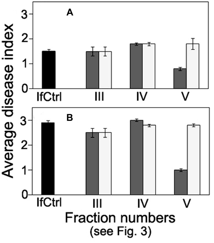 Comparison of anti-wilt activity of the fractions obtained by exclusion chromatography of high-molecular weight metabolites from  F. oxysporum  strain CS-20.  Seedlings were inoculated by immersion in a suspension with a final concentration of 10 6  spores/ml, containing spores of two pathogenic strains F37 and Fot3 (1:1). Disease symptoms were examined at 15  (A) , and 21  (B)  days after inoculation of tomato seedlings, which roots were pre-exposed to intact (dark gray columns) or proteinase K-treated (light gray columns) fractions eluted as peaks III, IV, and V. Inoculated seedlings non-exposed to the fractions are referred to as infected control (IfCtrl, black columns). Histograms represent values of average disease index from two independent experiments of each treatment done in triplicate. Bars represent SD.
