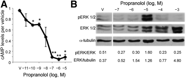 Propranolol dose dependently decreased cAMP levels and activated ERK1/2 in hemangioma stem cells (HemSCs). (A): HemSCs were treated with increasing doses of propranolol over a 7-log dose range (10 −11 M to 10 −5 M) and cAMP levels determined. Data presented as the fold-difference between propranolol-treated HemSCs relative to vehicle-treated HemSCs ± SEM; ∗, p