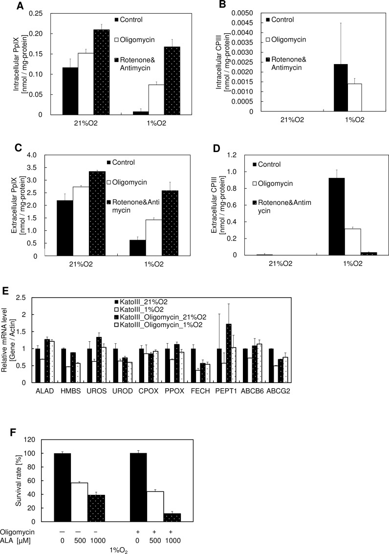 Effect of respiration inhibitors on PpIX production and photodynamic therapy. (A-D) KatoIII cells were incubated with 1 mM ALA and 0.1 μM oligomycin, 1 μM rotenone, or 1 μM antimycin for 24 h under atmospheres containing 21% O 2 or 1% O 2 . (A) Intracellular PpIX, (B) intracellular CPIII, (C) extracellular PpIX, and (D) extracellular CPIII were measured using HPLC. Data are expressed as the means ± S.D. from multi-replicated (n = 3) experiments. (E) KatoIII cells were incubated with 0.1 μM oligomycin for 24 h under atmospheres containing 21% O 2 or 1% O 2 . mRNA expression levels of ALAD , HMBS , UROS , UROD , CPOX , PPOX , FECH , PEPT1 , ABCB6 , and ABCG2 were analyzed by quantitative PCR. Data are expressed as the means ± S.D. from multi-replicated (n = 2) experiments. ALAD , aminolevulinic acid dehydrogenase; HMBS , hydroxymethylbilane synthase; UROS , uroporphyrinogen III synthase; UROD , uroporphyrinogen III decarboxylase; CPOX , coproporphyrinogen III oxidase; PPOX , protoporphyrinogen oxidase; FECH , ferrochelatase; PEPT1 , Peptide transporter 1 (F) KatoIII cells were incubated with 1 mM ALA and 0.1 μM Oligomycin for 24 h under atmospheres containing 21% O 2 or 1% O 2 . Exposure to light was performed under an atmosphere containing 21% O 2 and cell viability was measured using the MTT assay. Data are expressed as the means ± S.D. from multi-replicated (n = 3) experiments.