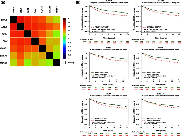 Gene expression analysis of BIRC5 and HR genes in primary breast tumors. a The correlation map illustrating pairwise correlations among BIRC5, RAD51, EME1, EXO1, BLM , and BRCA1 genes were established using the Breast Cancer Gene-Expression Miner v3.1 web tool. b Kaplan–Meier curves regarding expression of BIRC5, RAD51, EME1, EXO1, BLM , and BRCA1 genes in tumors from patients with breast cancer, were established using the Breast Cancer Gene-Expression Miner v3.1 web tool