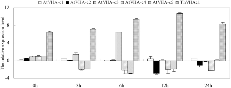 qRT-PCR analysis and comparison of five AtVHA-c subunits and ThVHAc1 in c1#10. The relative expression levels were all log 2 transformed. The x-axis shows the stress time point. The data are shown as the means ± SD of three independent experiments.